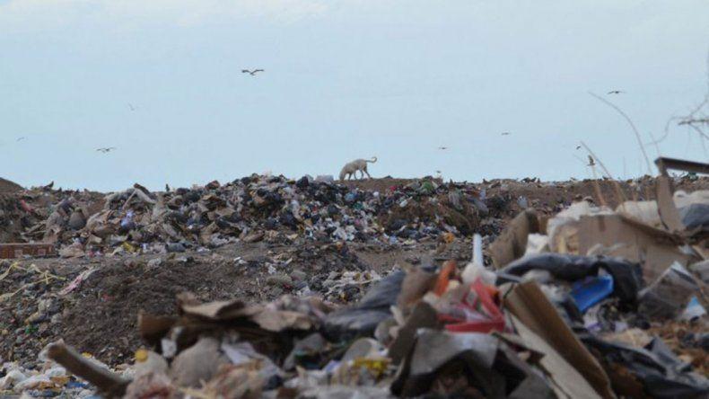 Son muchos los que buscan materiales para reciclar en el basural.