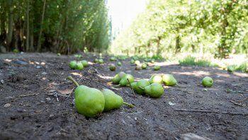 La producción frutícola en el Alto Valle está atravesando uno de sus peores años y todavía no tocó fondo.