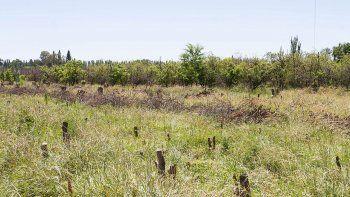 En la ciudad, la crisis frutícola ha arrasado con muchas chacras. Sus propietarios ya no pueden volver a producir.