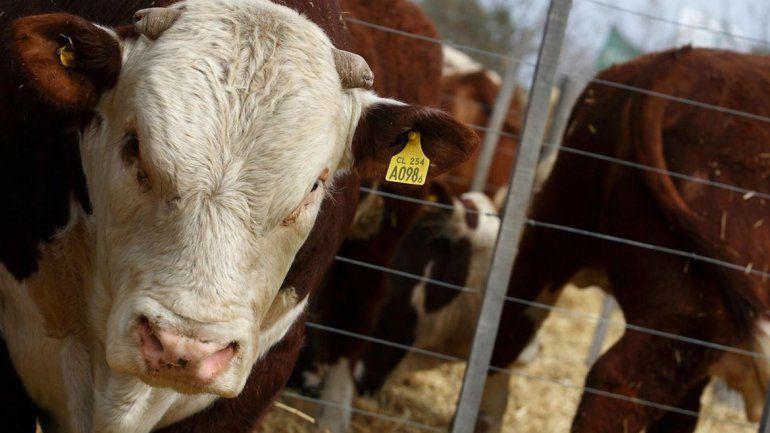 Río Negro es la primera provincia en exportar carne vacuna a Japón