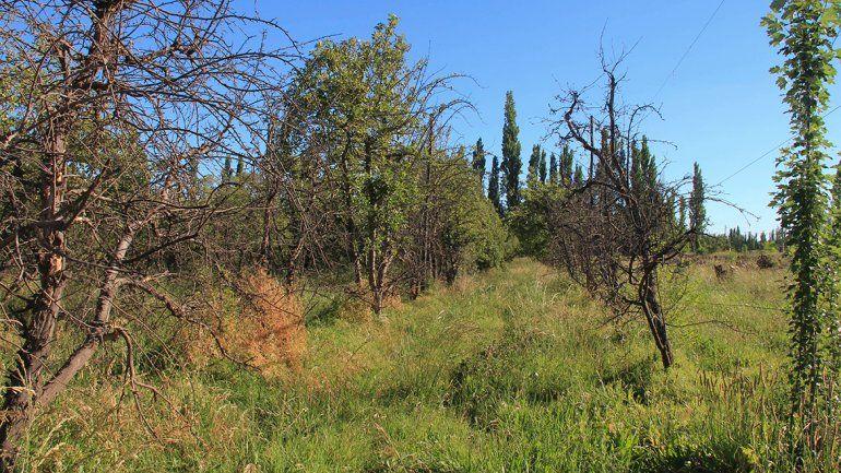 Las tierras sin producir proliferan ante la crisis de la fruticultura.