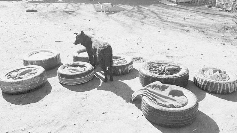 Inauguraron mejoras en el refugio canino que funciona en la Isla Jordán.