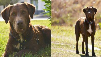 emotivo: cipoleno sale a silbar todos los dias por las calles para hallar a su perro jimmy
