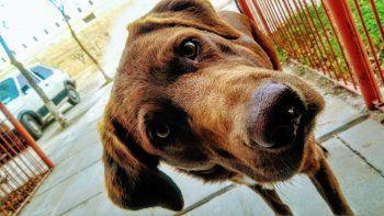 El perro Jimmy desapareció el 19 de julio de su hogar, en el DVN.