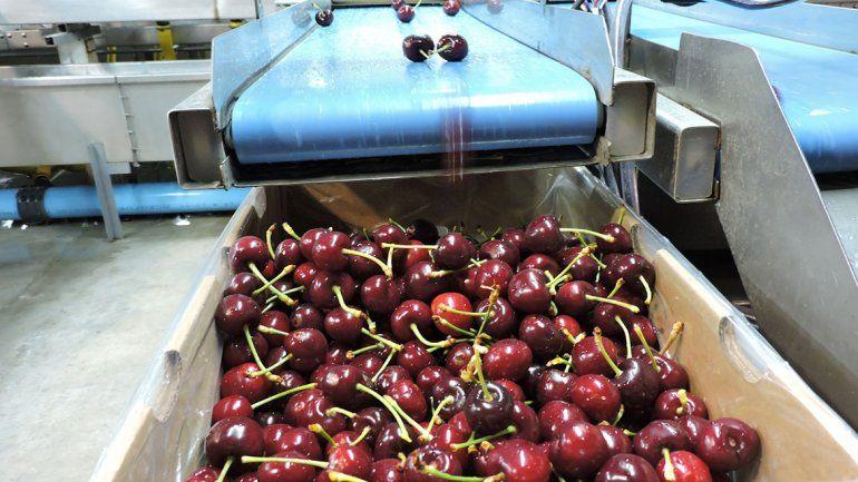 China enviará inspectores a las chacras de cerezas