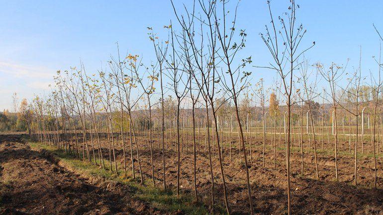 Cipolletti ganó un concurso con un plan para reforestar la Isla Jordán