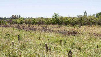Las autoridades municipales quieren que las tierras rurales estén en producción agrícola o de granja y que no se las deje tiradas sin un mínimo de cuidados.