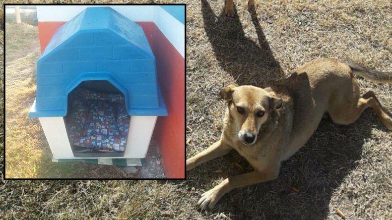 Una vecina compró una cucha para perritos callejeros y se la robaron en la Caminera