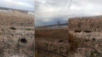 Alarma por la mortandad de perros en la planta cloacal de Roca