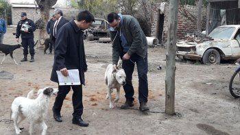 rescataron a 5 perros desnutridos durante un allanamiento