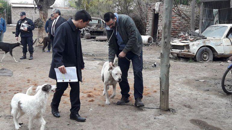 Rescataron a cinco perros desnutridos durante un allanamiento