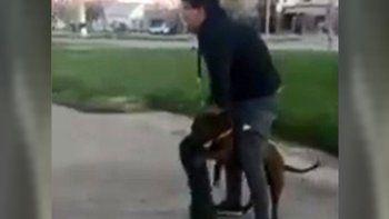agresion de un pitbull causo una gran indignacion
