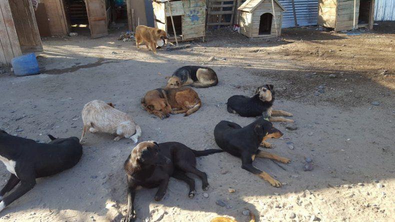 La guardería canina de la Isla Jordán sigue en el foco de la polémica. Los voluntarios que cuidan a los animales denuncian abandono y riesgo de infecciones.