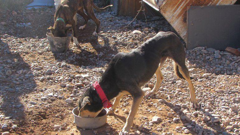 Los perros habían sido abandonados por un cazador de jabalíes.