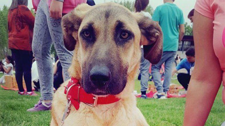 Son muchos los perros que necesitan cariño y un hogar.