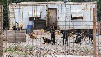 el municipio bajara los impuestos a los vecinos que adopten perros