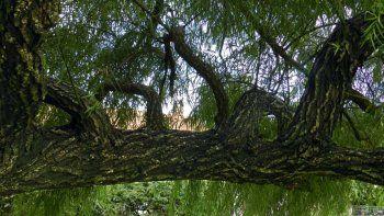 plantaran arboles de una especie en riesgo de extincion