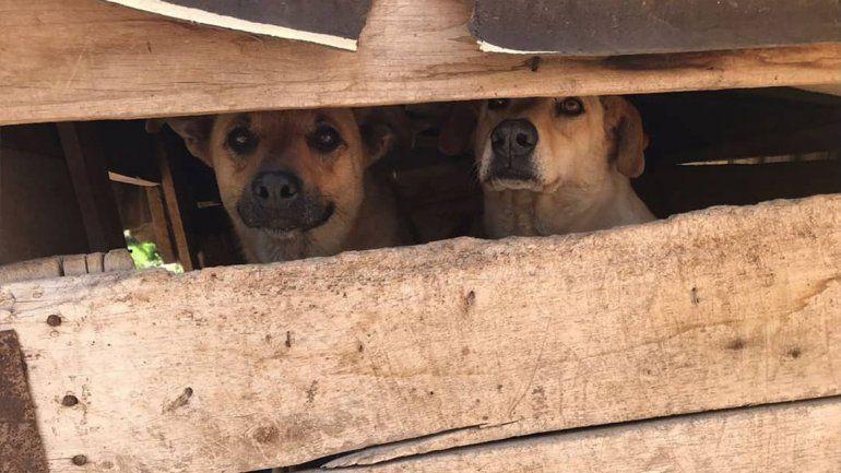 Los perros de la Isla Jordán necesitan ayuda para resguardarse del calor