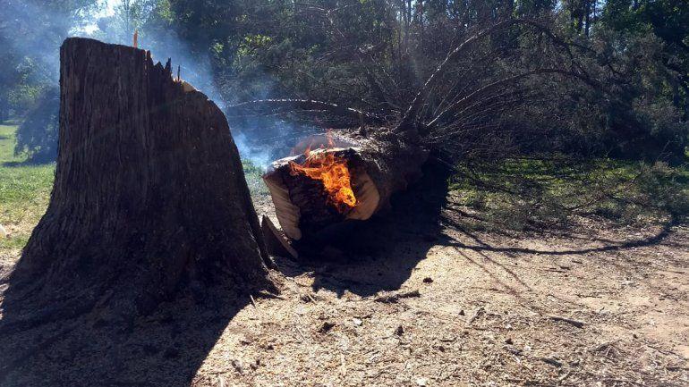 Bronca en la Isla Jordán: prendieron fuego un pino de 80 años para hacer un asado