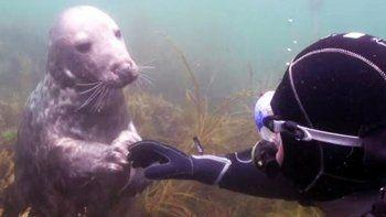 El tierno encuentro entre un buzo y una foca bebé