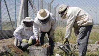 presos cipolenos aprenden sobre apicultura y hacen cremas faciales
