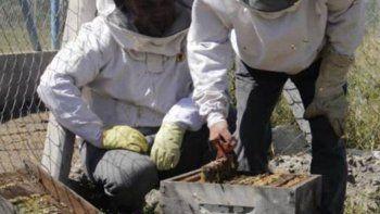 presos aprenden apicultura y hacen cremas faciales