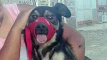 rescataron a un perro que era maltratado por su dueno