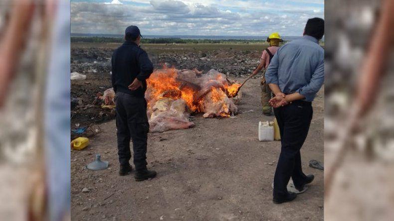Prendieron fuego 13 toneladas de carne ilegal decomisada