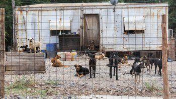 En el atestado refugio para perros de la Isla Jordán pululan las ratas. Existe temor por la expansión de enfermedades infecciosas. Harán una limpieza.