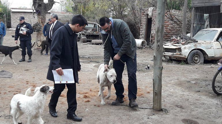 Le formularon cargos a un hombre de Roca por maltrato y crueldad animal