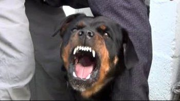 Salvaje ataque de un perro a una joven ciclista