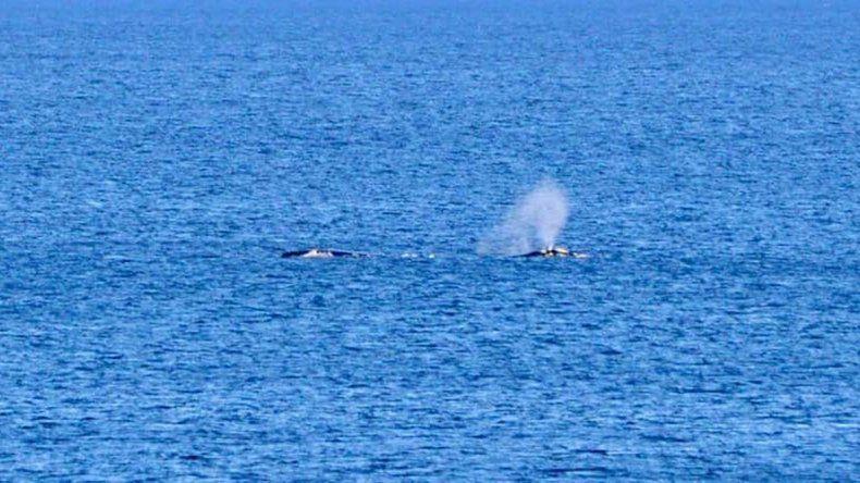 Las ballenas llegaron a Las Grutas y brindaron un espectáculo emocionante