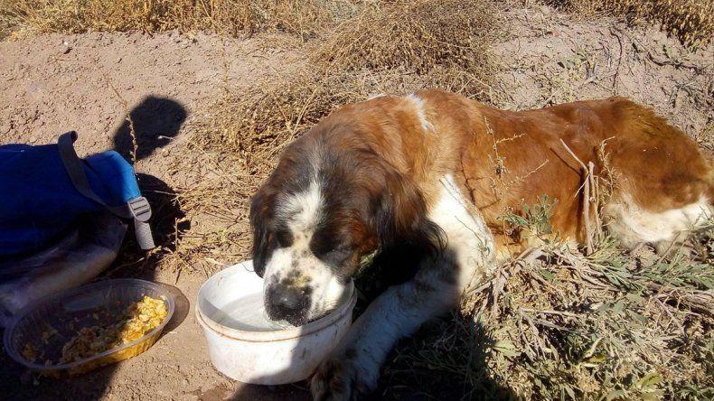 El rescate de una perra enferma y abandonada