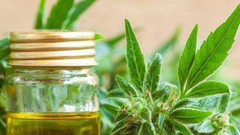 buscan regular el uso del cannabis medicinal en rio negro