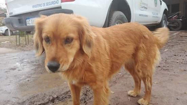 Lo detuvieron por un robo y su perrita lo espera afuera de la comisaría desde hace un año