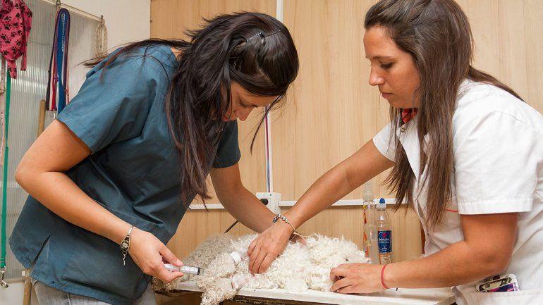Turnos online para castrar animales en el Club San Martín