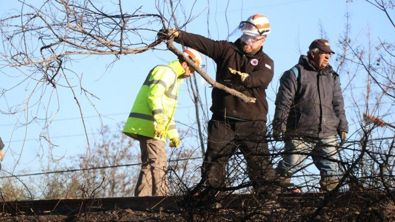 Sacaron un árbol que se quemó en el incendio del vivero y estaba por caer sobre las vías del tren
