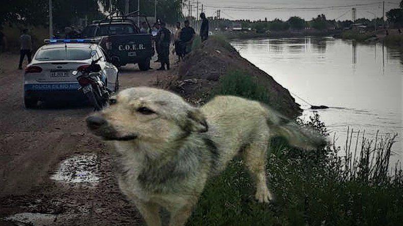 La emocionante historia del perro que encontró el cuerpo de su dueño en el Canal Principal