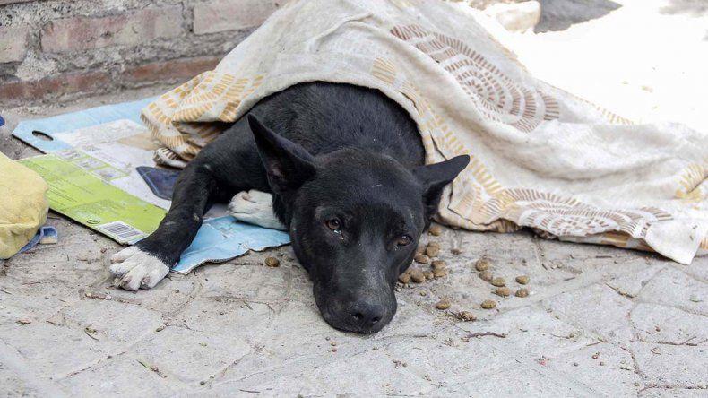 Vecinos lamentaron la muerte del perrito: Hicimos lo que pudimos por él