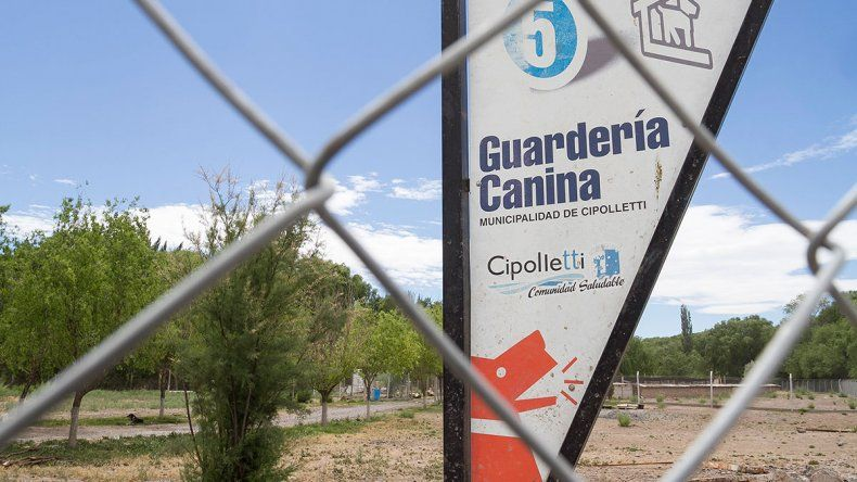 Guardería canina: crece el número de perros muertos