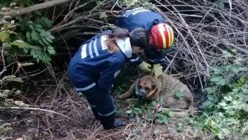 Bomberos rescataron a una perrita en Bariloche