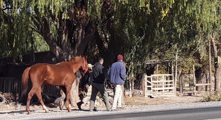 Encuentran a dos caballos pura sangre robados en una chacra