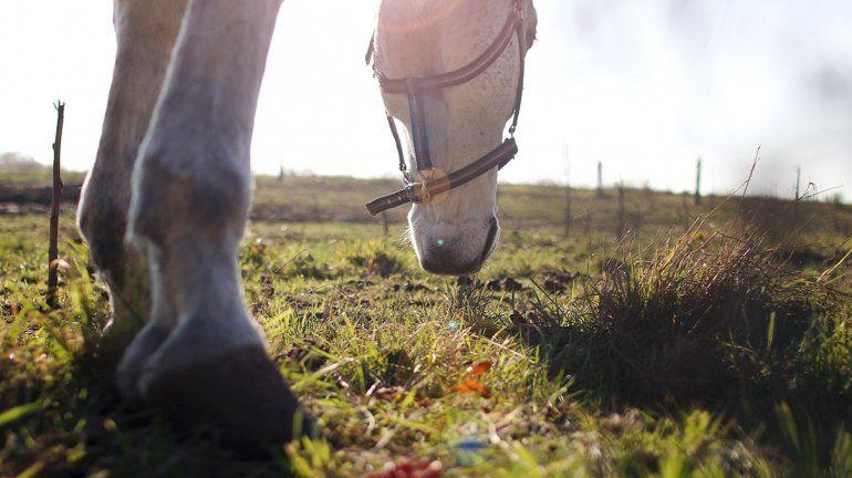 Se robaron un caballo, lo faenaron en su casa y los detuvieron