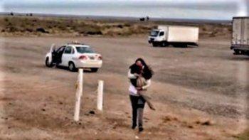 el perro que viajo 450 km en taxi para encontrarse con su duena