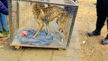 rescataron un perro en situacion de abandono en un allanamiento
