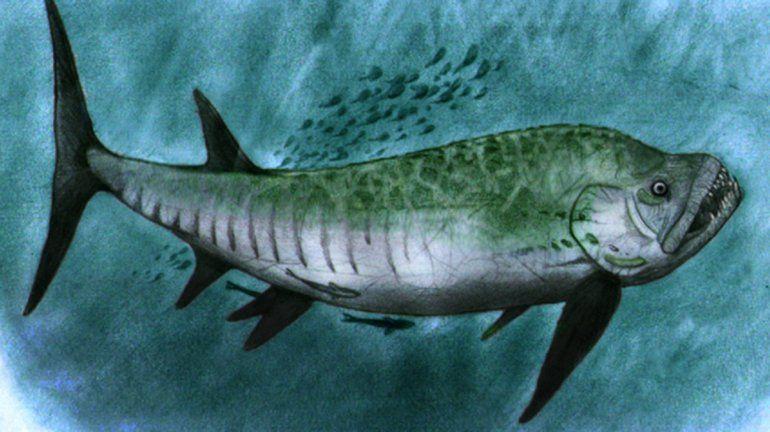 Descubrieron un pez gigante fósil de 70 millones de años en Chubut