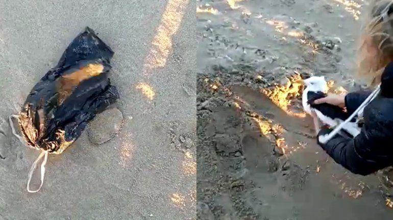 Kitesurfistas salvaron a una gaviota enredada en una bolsa de nylon