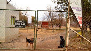 aumentaron las adopciones de perros en pandemia