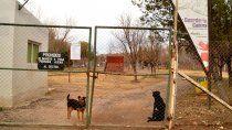 durante la pandemia crecio el numero de adopciones de perros