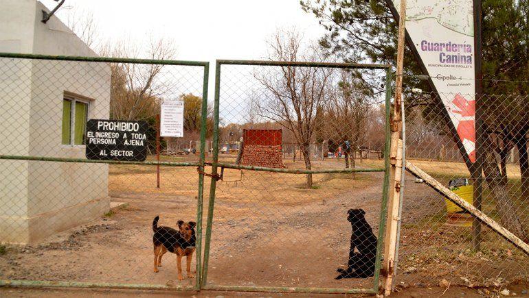 Durante la pandemia creció el número de adopciones de perros